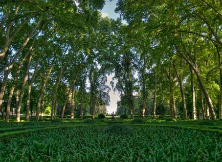 5 Elementos importantes para poder tener un jardín ecológico.