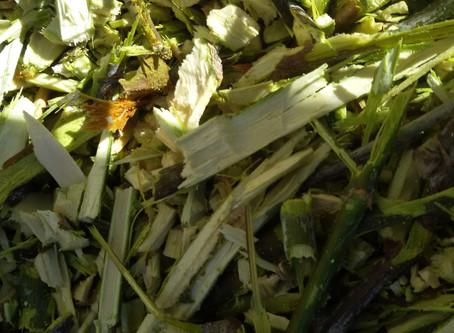 Como hacer un buen abono natural y poder utilizarlo como Mulching