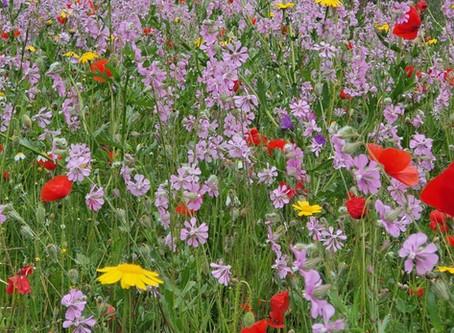 Praderas de flores naturales.              ¿Que beneficios podemos tener?