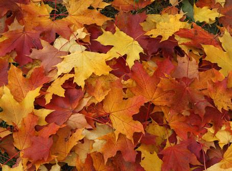 Como aprovechar las hojas que caen de los arboles en la estación de otoño.