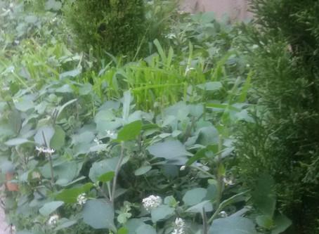 Simbiosis entre las plantas y las mal llamadas malas hierbas