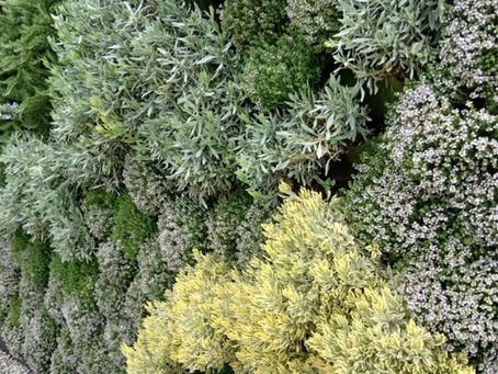 Huertos de hortalizas y plantas aromáticas, para pequeños y grandes espacios.