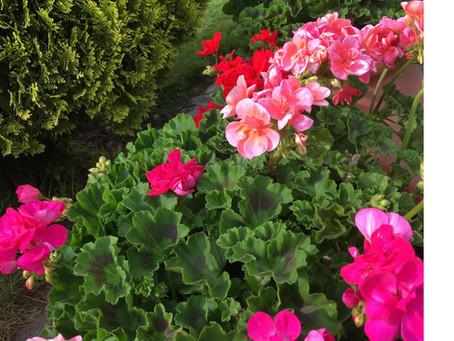 Lo bueno de realizar tratamientos con los estratos de las plantas.