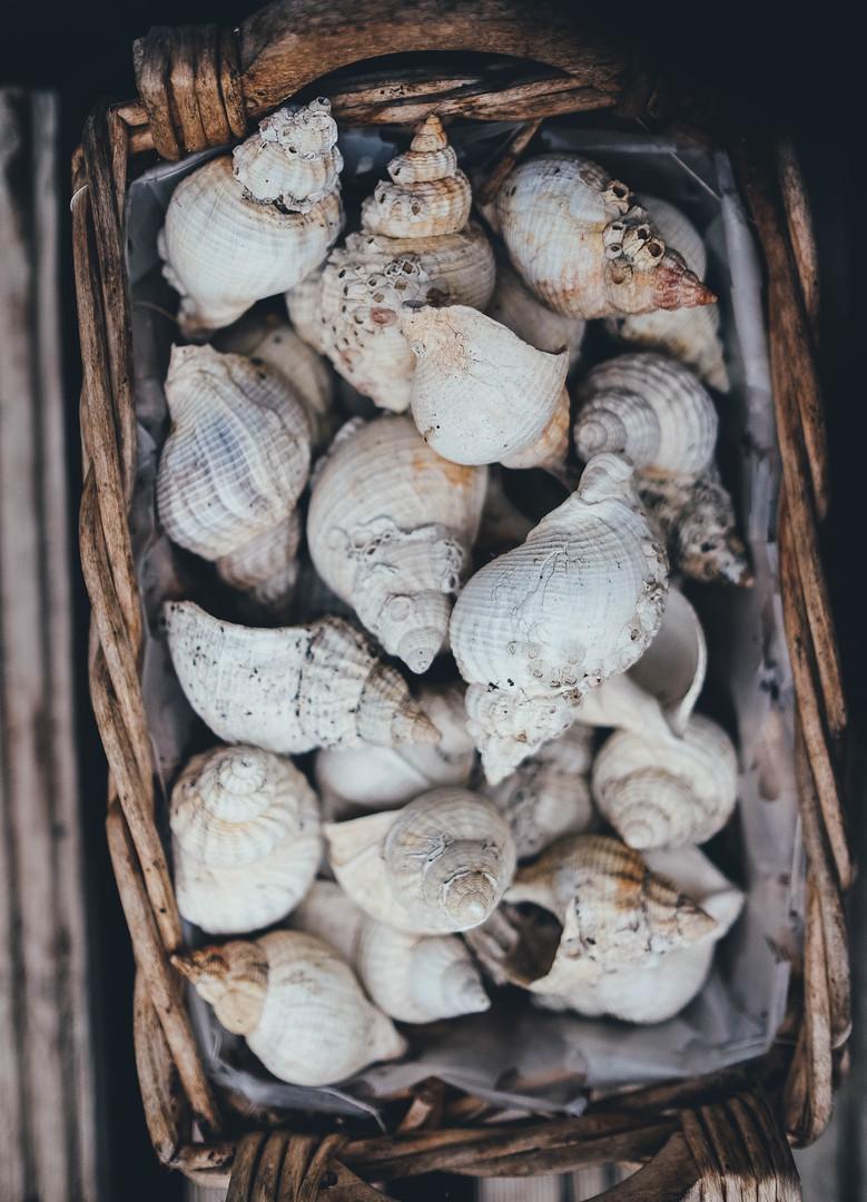 shells in basket.jpg