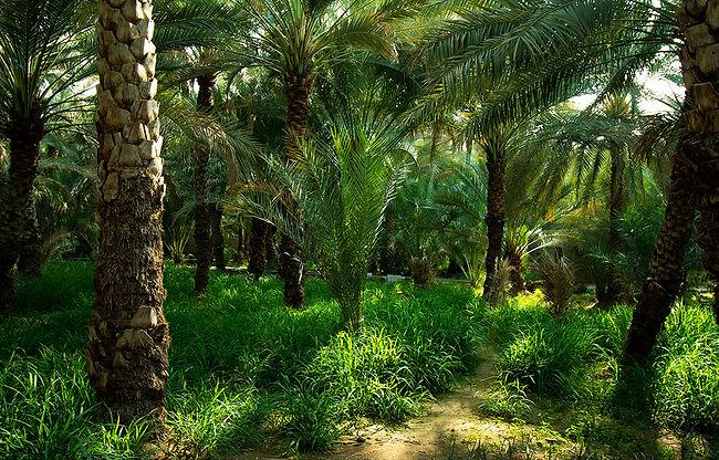 postalcard palm toom.jpg