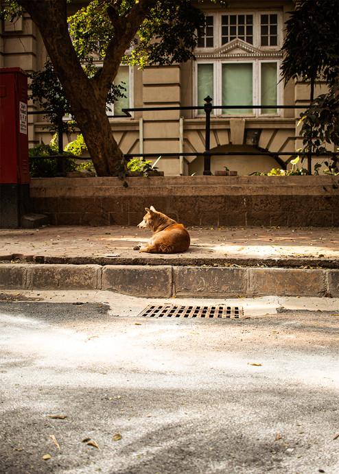 Dog on street   Mumbai