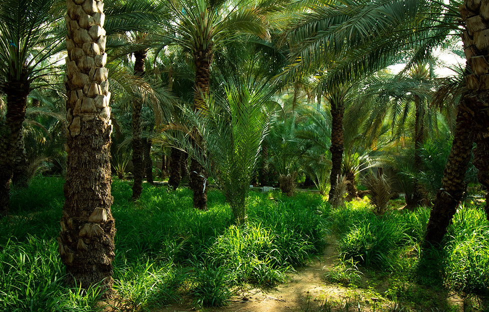 Palmeraie Al Ain   UAE