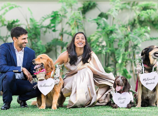 How to Prepare Your Pooch to Participate in Your Wedding Ceremony