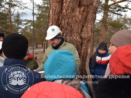 Высококлассные специалисты обследовали сосну-памятник на Байкале