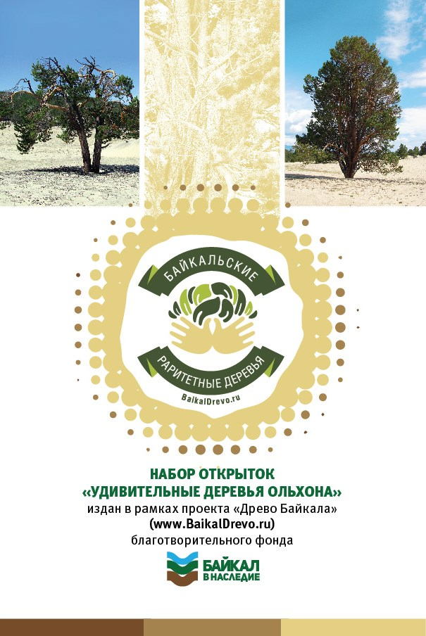 Серия открыток _Удивительные деревья Ольхона_