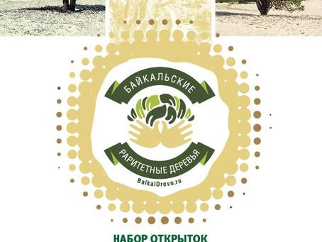 Удивительные деревья Ольхона попали на открытки