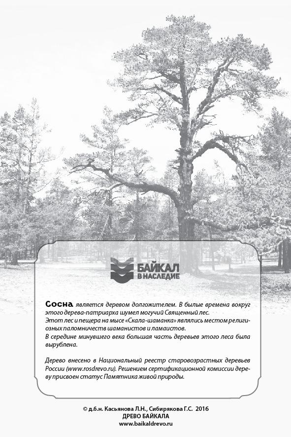 """Сосна-памятник на открытке из альбома """"Удивительные деревья Ольхона"""" (оборотная сторона)"""
