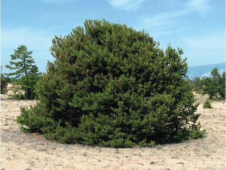 Разработан проект Сарайского ландшафтного парка с зоной чудо-деревьев