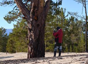 Деревья-патриархи защитят от топоров