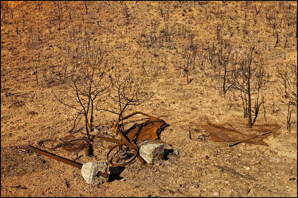 . After the wildfire .