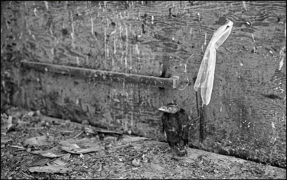 . Leica M6 . Summicron 50 mm .