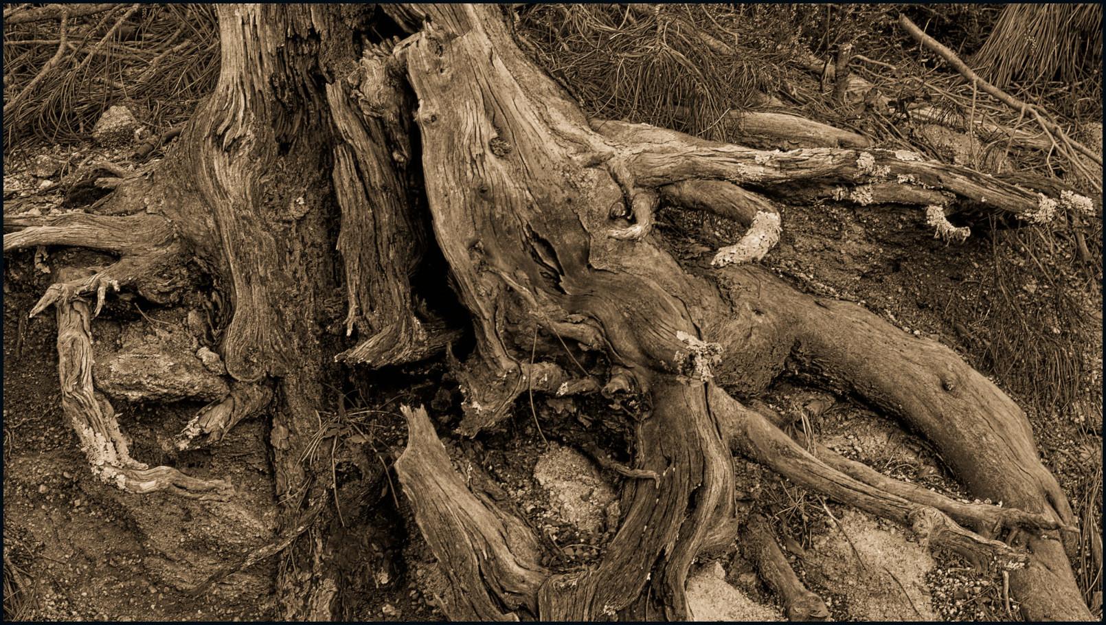 .  L'arbre-coeur  .