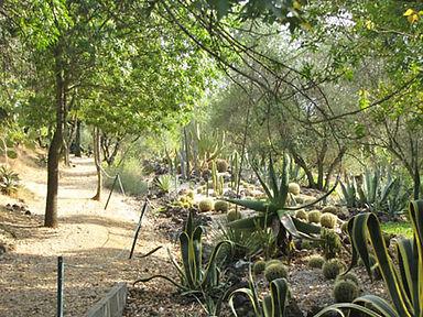 cactus parc1.jpg