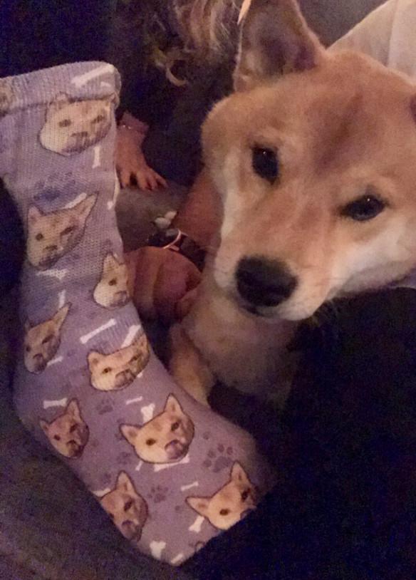 Coup de coeur : chaussettes personnalisées pour les amoureux des animaux