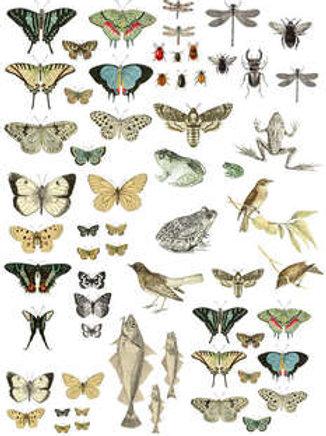 "IOD Decor Transfers ""Entomology Etcetera"""