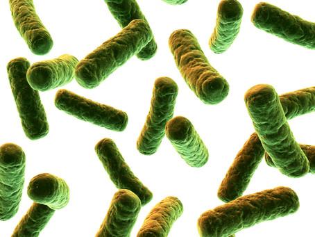 益生菌到底怎麼選?專家呼籲:保健從「菌株」看起!別再混淆了!