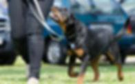 Shelter_dog-school-672716_1920.jpg