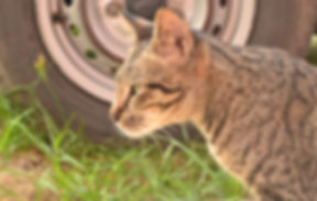PetTransfer_a-cat-789470_1920.jpg
