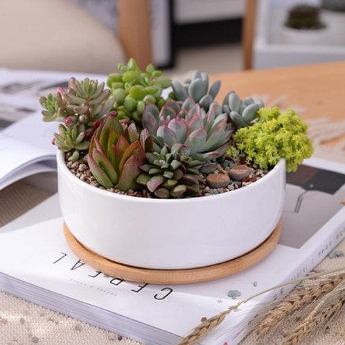 Minimalist White Ceramic Succulent Plant Pot.