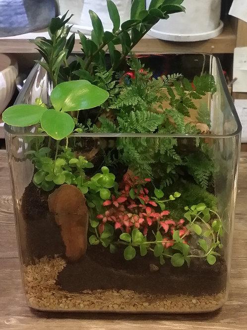Mini Landscaping in FishTank
