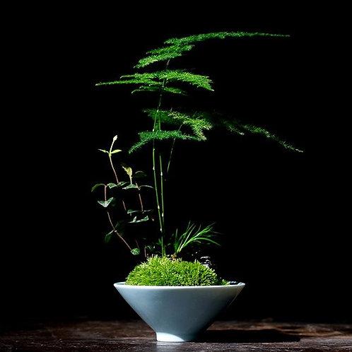 Miniature Moss Garden with Asparagus