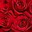 Thumbnail: Classic Rose Heart