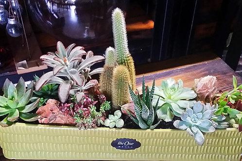 Garden Succulent Pot