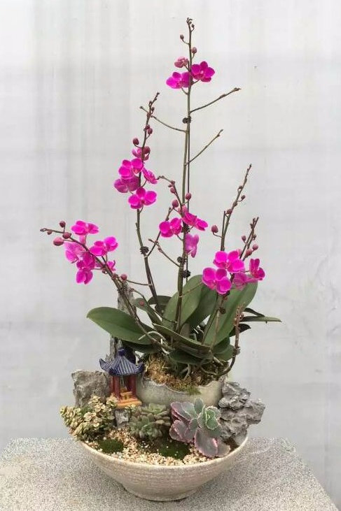 Dendrobium Garden