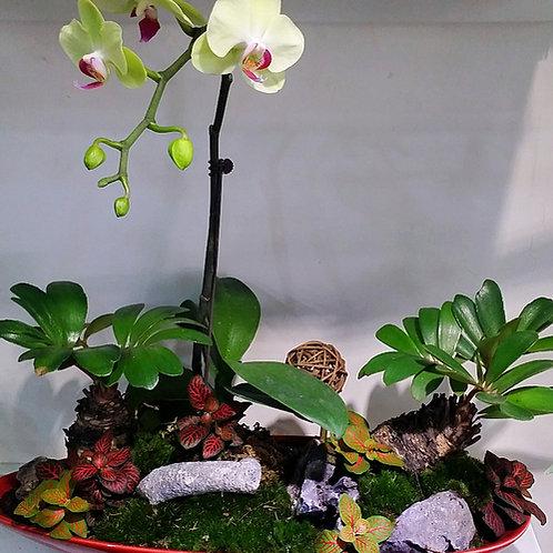 Orchid Mini Garden