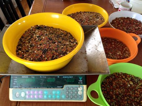 cover crop seeds .JPG