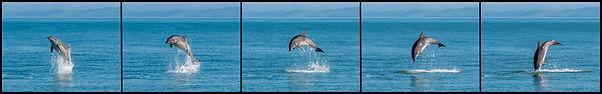 dolphin leap sequenceborder copy.jpg