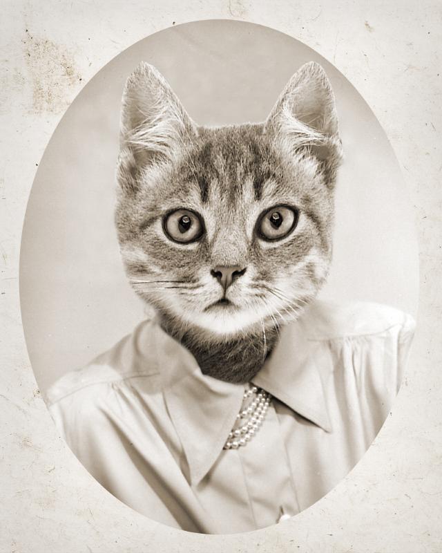 Cat portrait with clothes
