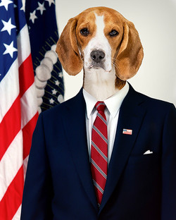 Dog portrait US president