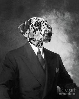 portrait-of-a-dalmatian-dog-in-a-black-s