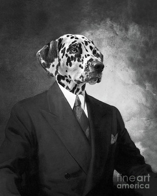 portrait-of-a-dalmatian-dog-in-a-black-s