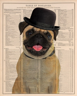 Dog portrait with bow hat