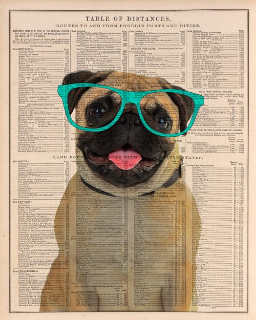 Dog portrait with fun glasses