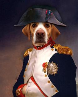 Napoleon pet portrait