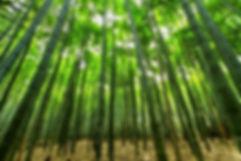 nature-1283976_1920.jpg