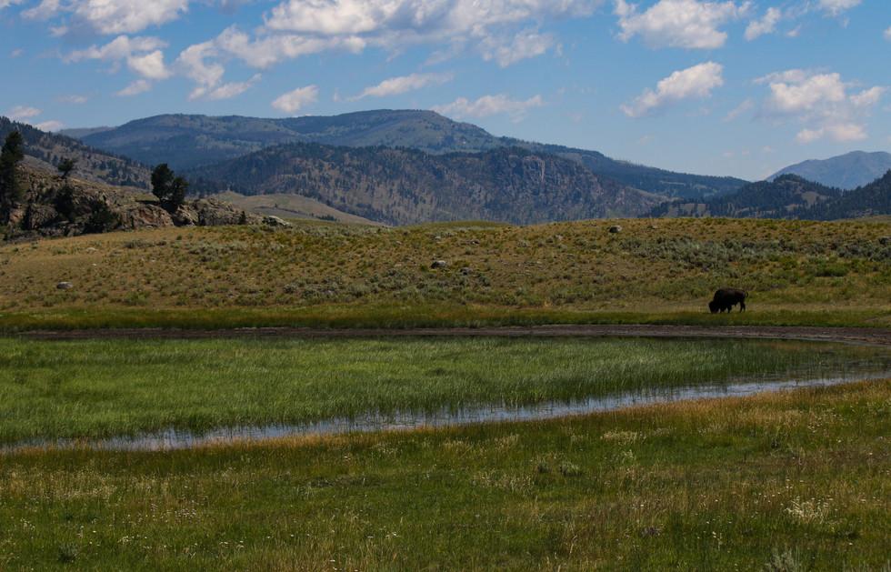 Lamar Valley - Yellowstone NP