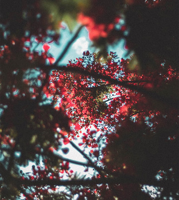 unsplash_red_Blossoms.jpg