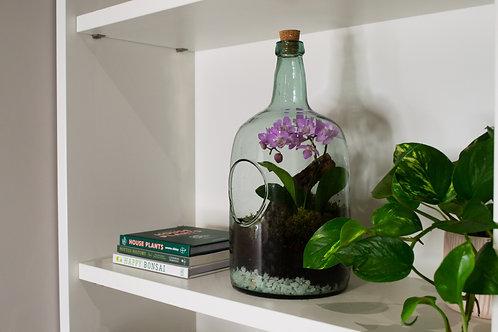 Premium Orchid Terrarium