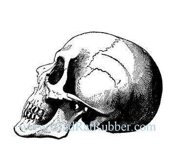 V643 Skull Profile Large