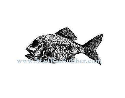 V623 Zippei Fossil Fish