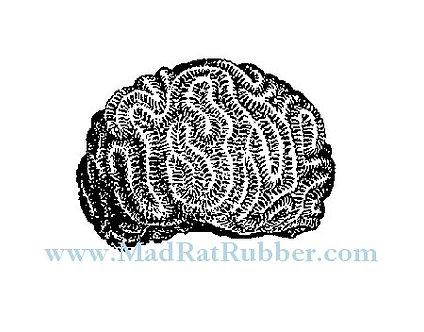 V634 Brain Coral